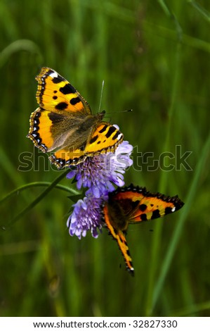 Two butterflies on a flower - stock photo