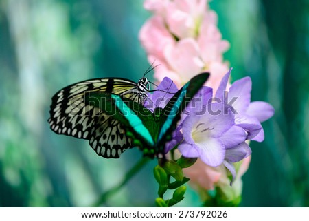 two butterflies on a flower on a colored background macro - stock photo