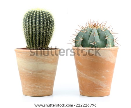 two cactus on a white background - stock photo