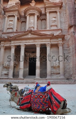 Two camels in front of Treasury at Petra Jordan - stock photo
