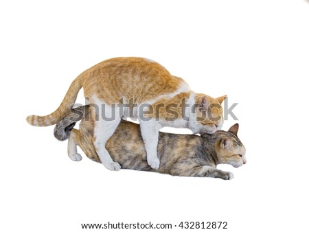 cats mating stock photos royaltyfree images  vectors