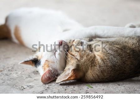 two cat sleep - stock photo