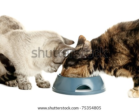 Two cats eating from one bowl over white - stock photo