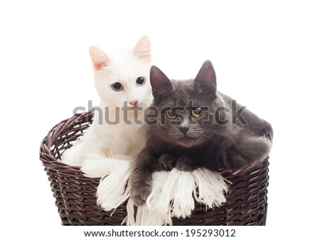 two cats in a wicker basket