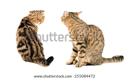 Two cats, looking at each other, sitting together isolated on white background - stock photo