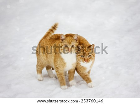 two cats nestled to each other outdoor in snowy background, best friends forever - stock photo