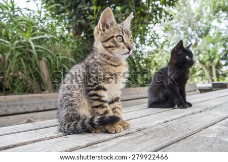 Two cats on a table staring at something - stock photo