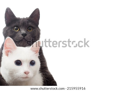two cats on a white background isolated