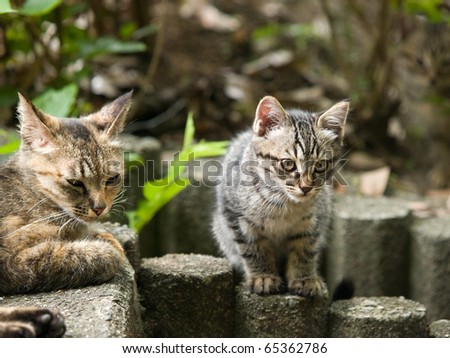 Two cats on a wooden log - stock photo