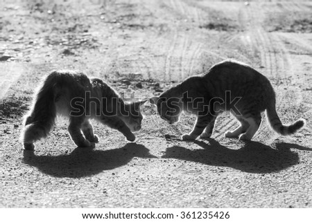 Two cats on country road, black and white photo - stock photo