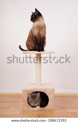 two cats on small cat play tower or tree                              - stock photo