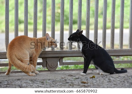Two cats ready to fight