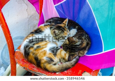Two cats snuggling up to each other while sleeping. - stock photo