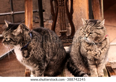 stock-photo-two-cats-waiting-for-lunch-3