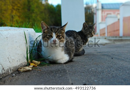 Two cats with white collar