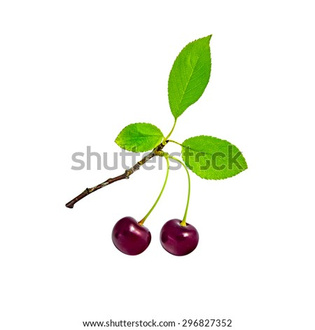 Two cherries with three leaves on the twig isolated over white background