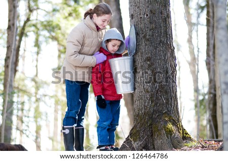 two children looking in a sap bucket at a sugar bush - stock photo