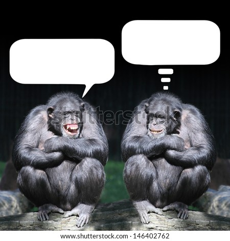 Two chimpanzees having a fun. - stock photo