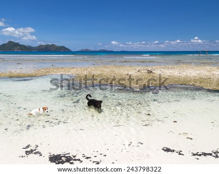 two clever funny dog playing in the pure transparent sea - stock photo