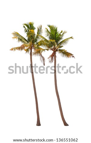 Two coconut palm trees isolated on white background - stock photo