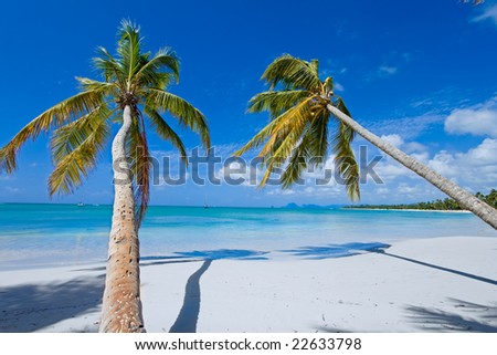 two coconut palms on white paradise beach with turquoise water (caribe) - stock photo