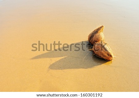 Two coconuts on the sandy sea shore - stock photo