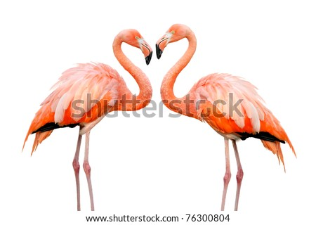 Two colorful flamingos looking at each other and building a heart-shape - stock photo