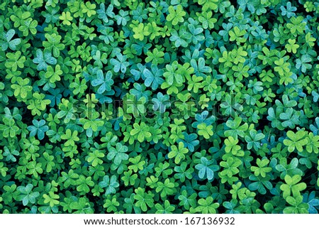 Two Colors blue green clover background - stock photo
