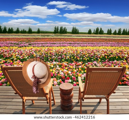 Two convenient chaise lounges stand on a roadside on wooden scaffold. The elegant women's hat hangs on one of them. The huge field of buttercups  in the kibbutz on border with Gaza Strip
