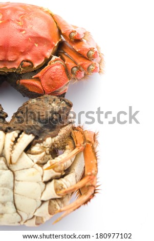 two cooked crabs on a white background with clipping path - stock photo