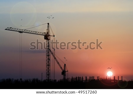 Two Crane on a Sunset with Bird