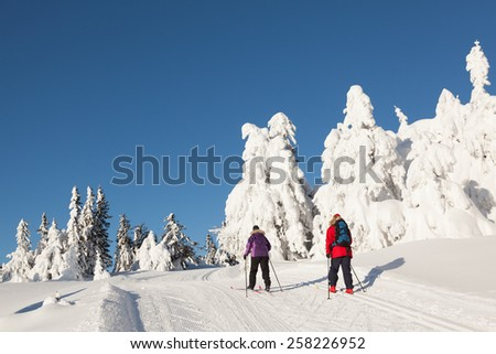 Two cross country skiers against a background of snow wrapped firs and a clear blue sky - stock photo