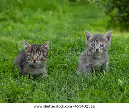 Two curious small kittens sitting in the grass looking at the camera