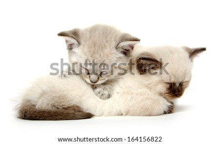 Two cute baby American shorthair kittens sleeping on white background