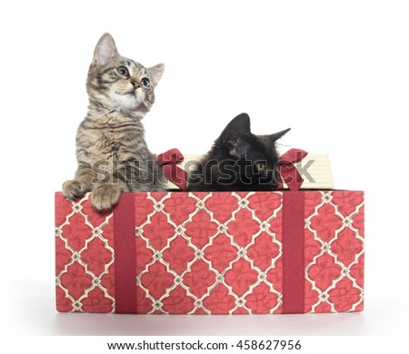 Two cute baby cats with Christmas gift box isolated on white background