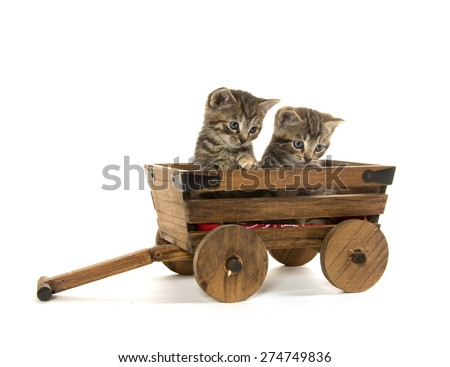 Two cute baby tabby kittens inside of wooden wagon isolated on white background - stock photo