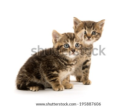 Two cute baby tabby kittens on white background
