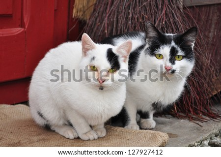 Two cute cats - stock photo