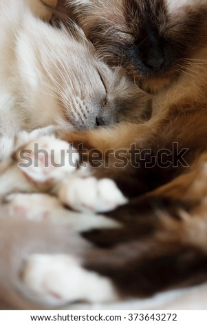 Two cute cats sleeping - stock photo