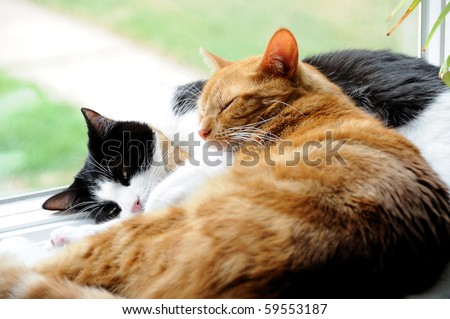 Two cute domestic short hair cats snuggle with one another in a window - stock photo