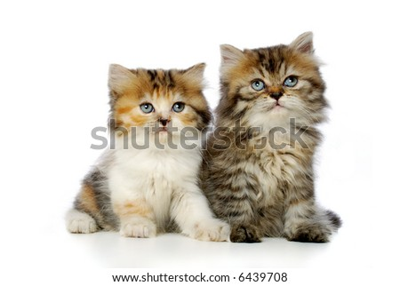 Two cute kitten on white background - stock photo
