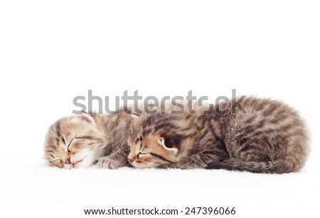 Two cute kitten sleeping on white blanket