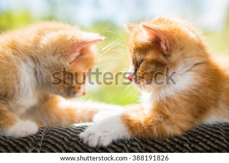 Two cute kittens playing on the couch - stock photo