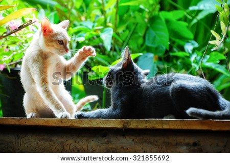two cute kitty cats playing together - stock photo