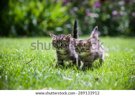 Two cute little kittens running through the green lawn - stock photo