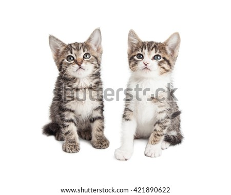 Two cute little tabby kittens sitting together over white background