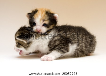 Two cute small cats