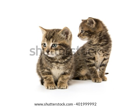 Two cute tabby kittens isolated on white background