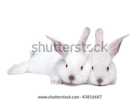 Two cute white isolated baby rabbits. - stock photo