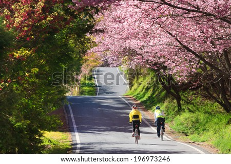 Two cyclists riding on a country road flanked by trees in blossom. - stock photo